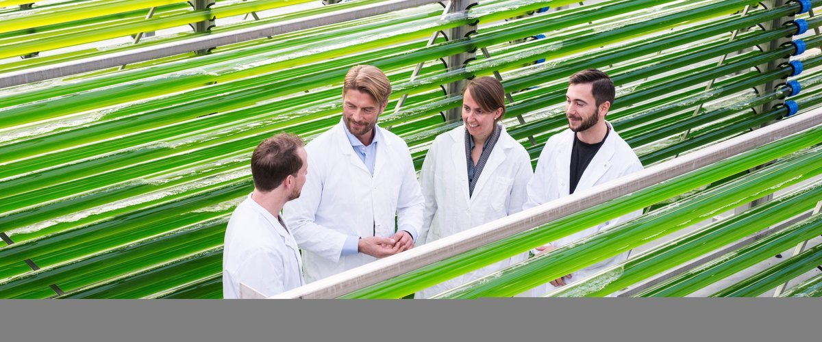 GREENHOUSE: - I am convinced that microalgaes can revolutionize the fish farming industry, says Hans Kleivdal (second from the left). Here at the Mongstad test centre, with Jeroen de Vree (University of Bergen University), Dorinde Kleinegris (Uni Research) and Tom Roger Lid (CO2Bio). Photo: Thor Brødreskift for the University of Bergen