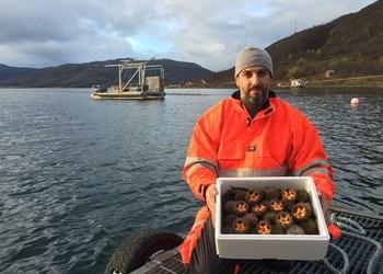 - Nå er vi ett skritt nærmere kråkebolleoppdrett i Austevoll, sier administrerende direktør Giampiero Scanu i Troms Kråkebolle.